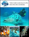 Mosaic Holidays Maldives Sri Lanka and Dubai catalogue cover from 04 March, 2014