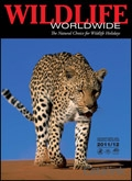 Wildlife Worldwide catalogue cover from 31 March, 2011