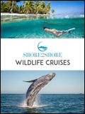 Wild Cruises Newsletter